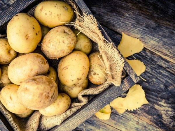 Популярные сорта фиолетового картофеля