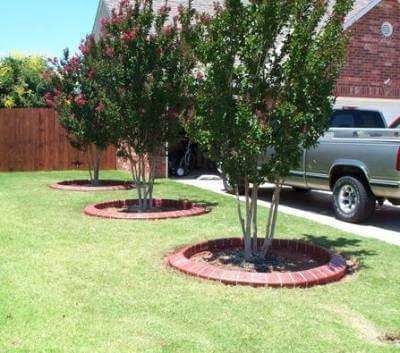 Приствольные круги плодовых деревьев: оформление - 15 фото
