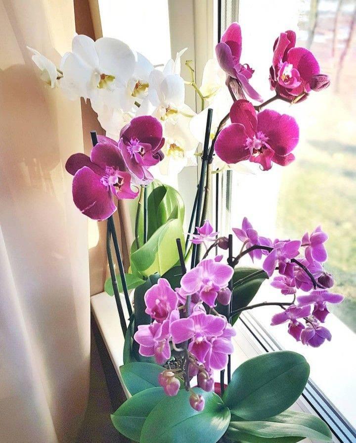 Расцветки орхидеи selo.guru — интернет портал о сельском хозяйстве