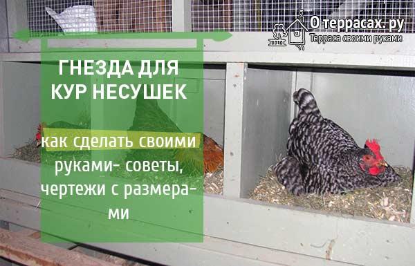 Гнезда для кур несушек: как сделать своими руками, размеры, чертежи