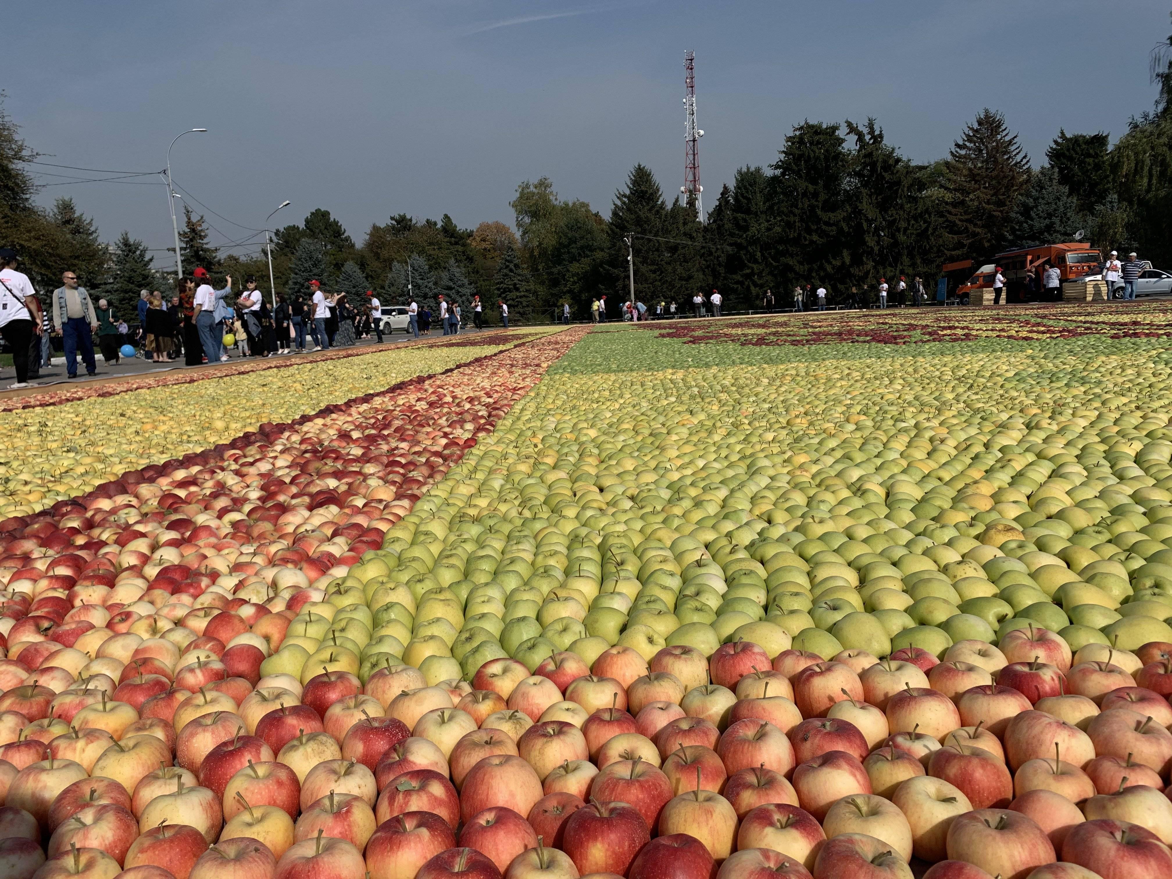 Самое большое в мире яблоко - огород и сбор