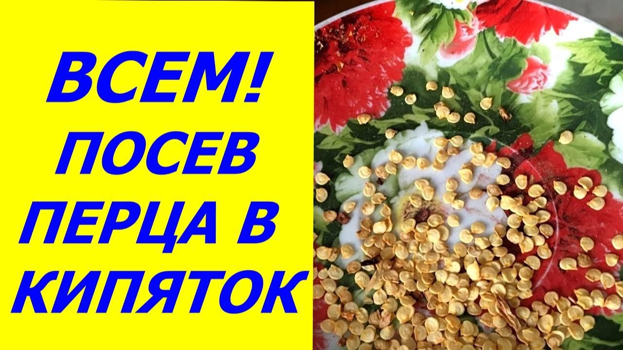 Болгарский перец от семян до плодов. советы опытного огородника