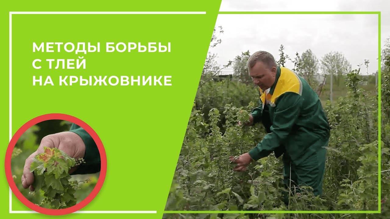 Как ухаживать за крыжовником весной чтобы был хороший урожай