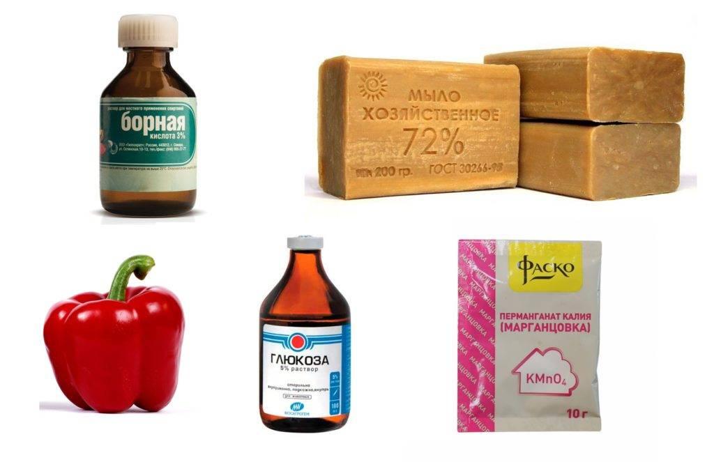 Борная кислота для перцев: опрыскивание, как удобрять, как развести