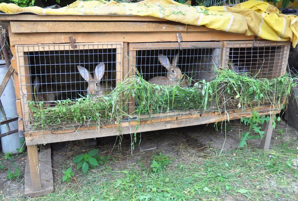Как построить бизнес по разведению кроликов?