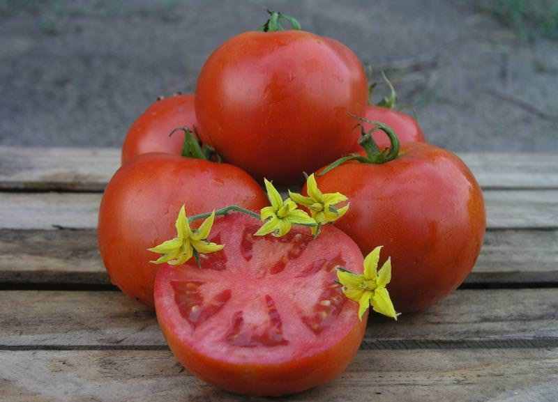 Характеристика и описание сорта томата махитос f1. описание гибридного сорта томатов махитос f1 и выращивание рассады