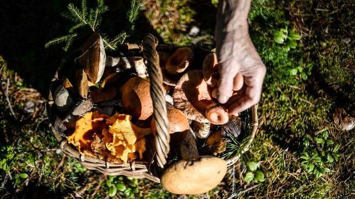 Грибы в краснодарском крае 2021: когда и где собирать, сезоны и грибные места