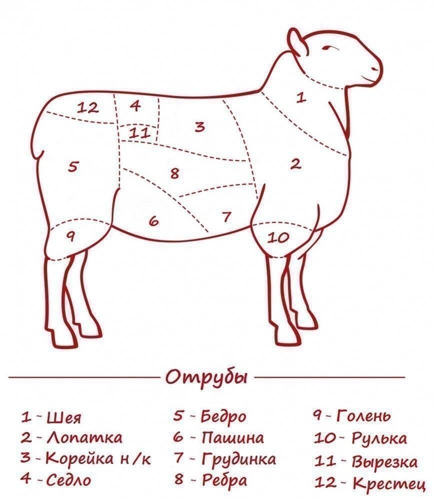 Как правильно разделать барана: обработка и этапы забоя