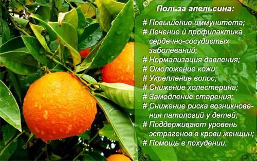 Апельсин: калорийность, состав, польза и вред для здоровья человека
