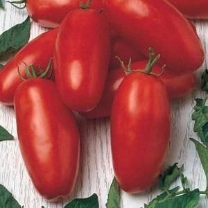 Кто томат «челнок» сажает, урожай богатый получает