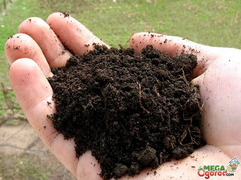 Как раскислить почву на своем огороде