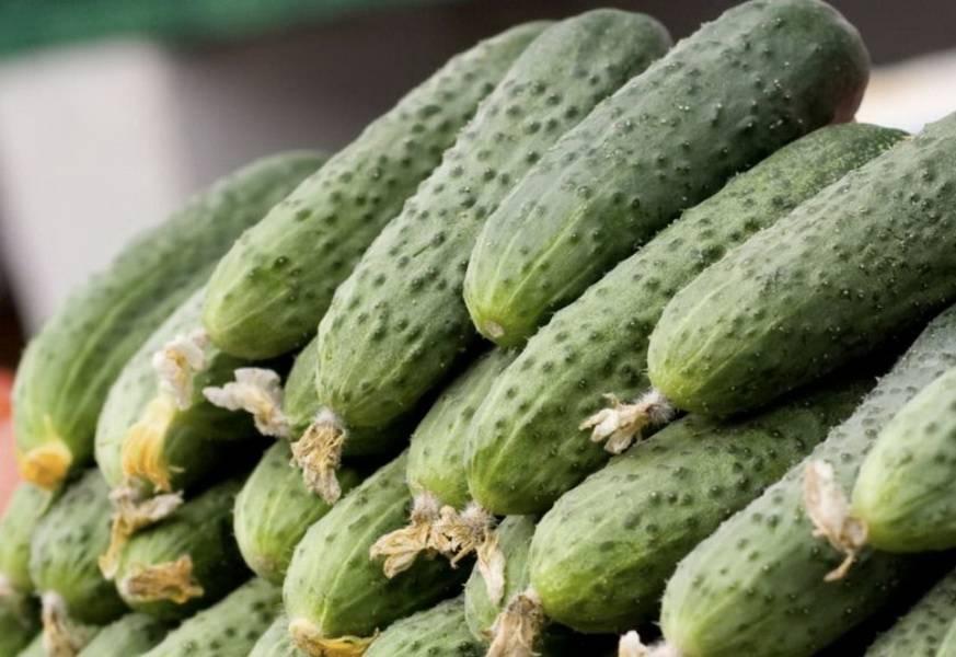 Вкусные и сочные урожаи — огурец хрустящая грядка f1: отзывы и описание сорта