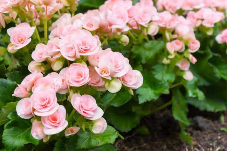 Комнатные цветы цветущие круглый год — неприхотливые и красивые растения