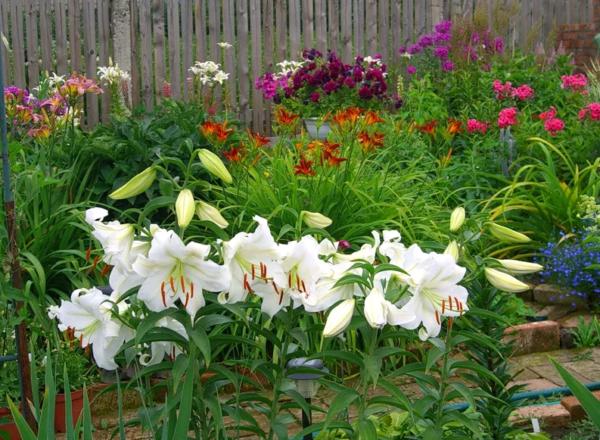 Обзор видов и популярных сортов лилий