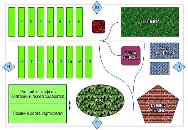 Севооборот овощей: схема для органических гряд