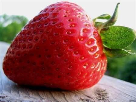 Безусая клубника: лучшие сорта, способы размножения, посадка и уход с фото
