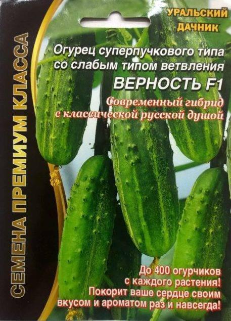 Огурцы мева f1 – высокопродуктивный партенокарпический сорт на все времена года