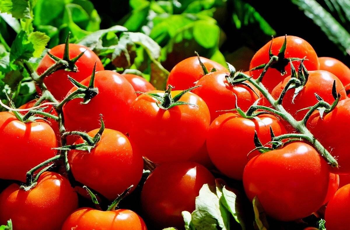 К чему снится помидоры?