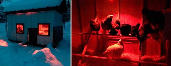 Инфракрасные лампы для курятников: керамические красные лампы для обогрева, инструкция по использованию тепловой ик-лампы зимой