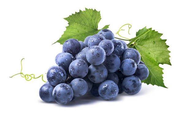 Виноград изабелла: всё о выращивании сорта, рекомендации по уходу за культурой