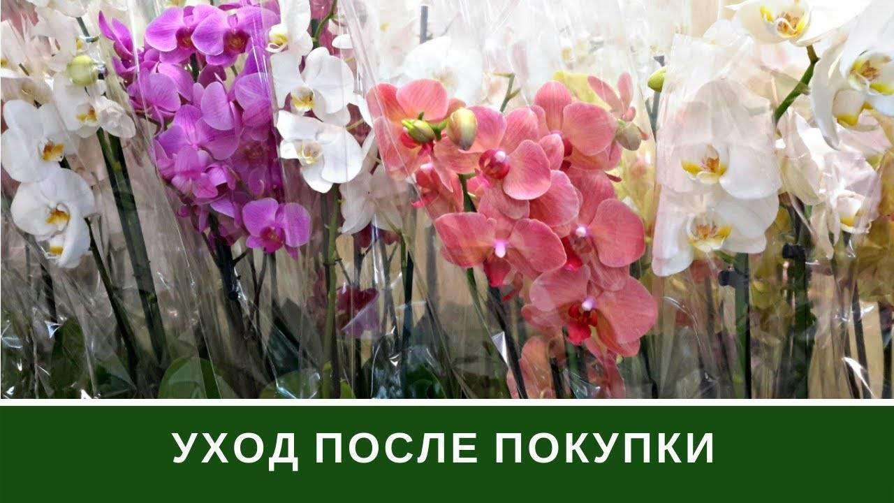 Уход за орхидеями зимой в домашних условиях: советы, как ухаживать за растением на подоконнике в этот период, как его перевезти при необходимости