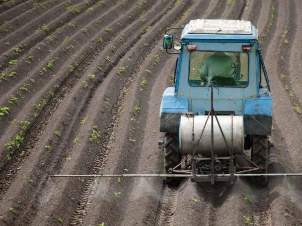 Лазурит от сорняков: инструкция по применению для картошки и других культур