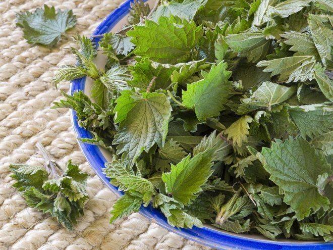 Удобрение из крапивы для растений: рецепты, видео, фото и отзывы