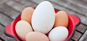 Гусиные яйца: польза и вред, советы по нормам и способам употребления