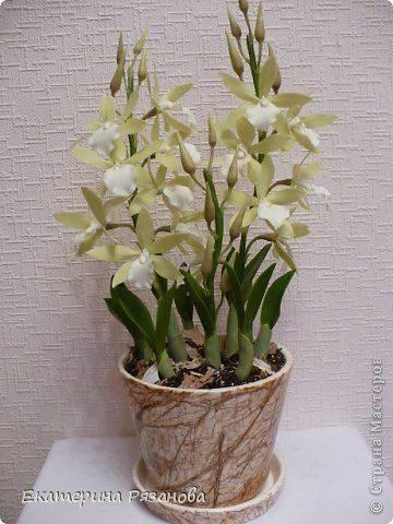 Флористика искусственная лепка орхидея брассавола нодоза гипс цемент глина фарфор холодный