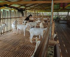 Строительство овчарни своими руками