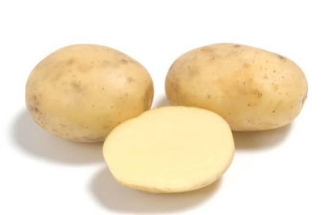 Картофель «королева анна»: описание сорта, фото и отзывы
