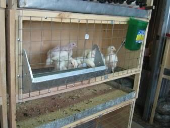 Клетка для цыплят: как сделать своими руками, особенности конструкции для выращивания бройлеров