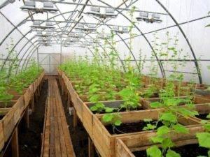 Высадка рассады томатов в теплицу в 2021 году: сроки, правила, подготовка