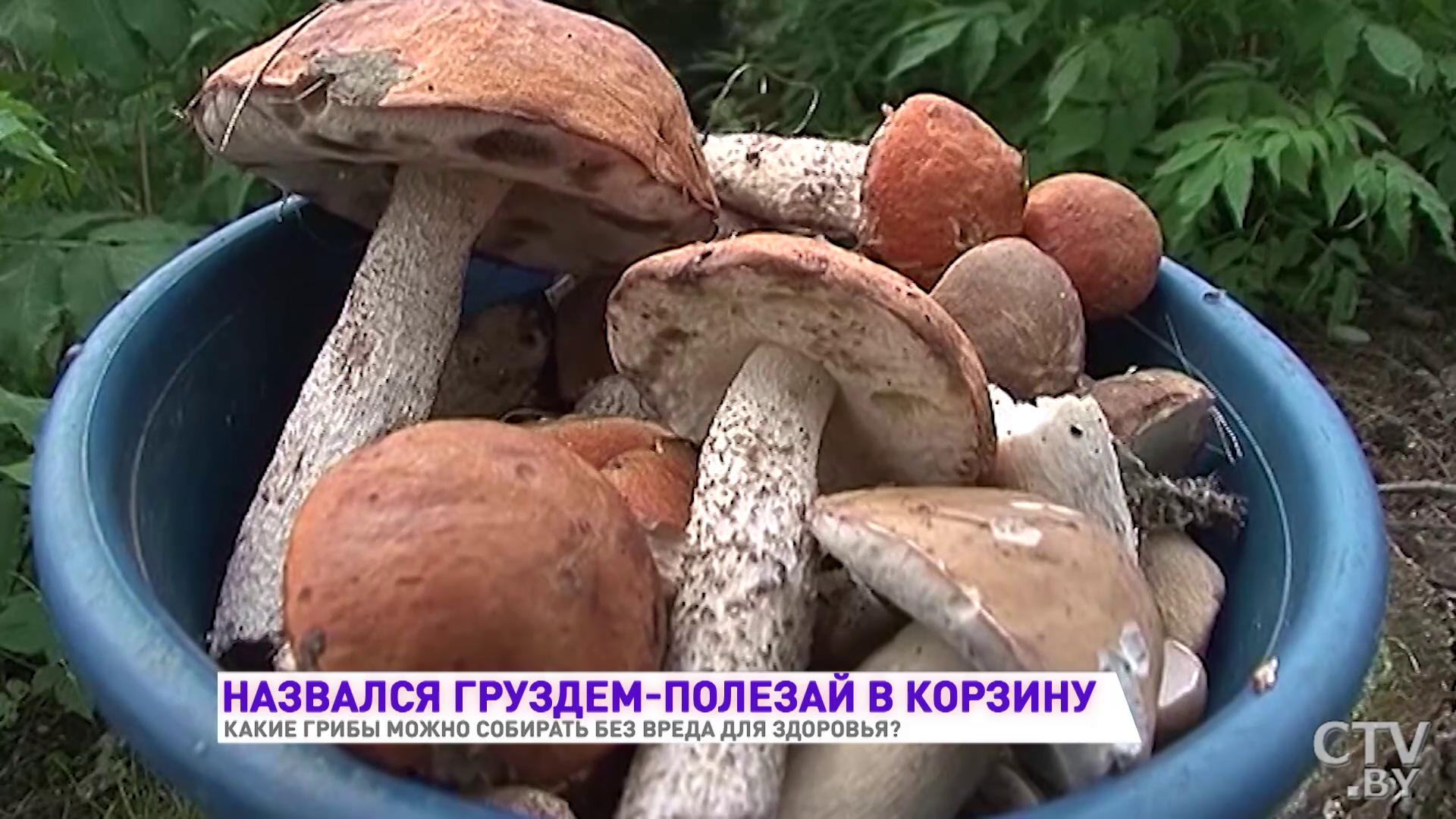 Почему нельзя собирать грибы возле дороги - дневник садовода semena-zdes.ru