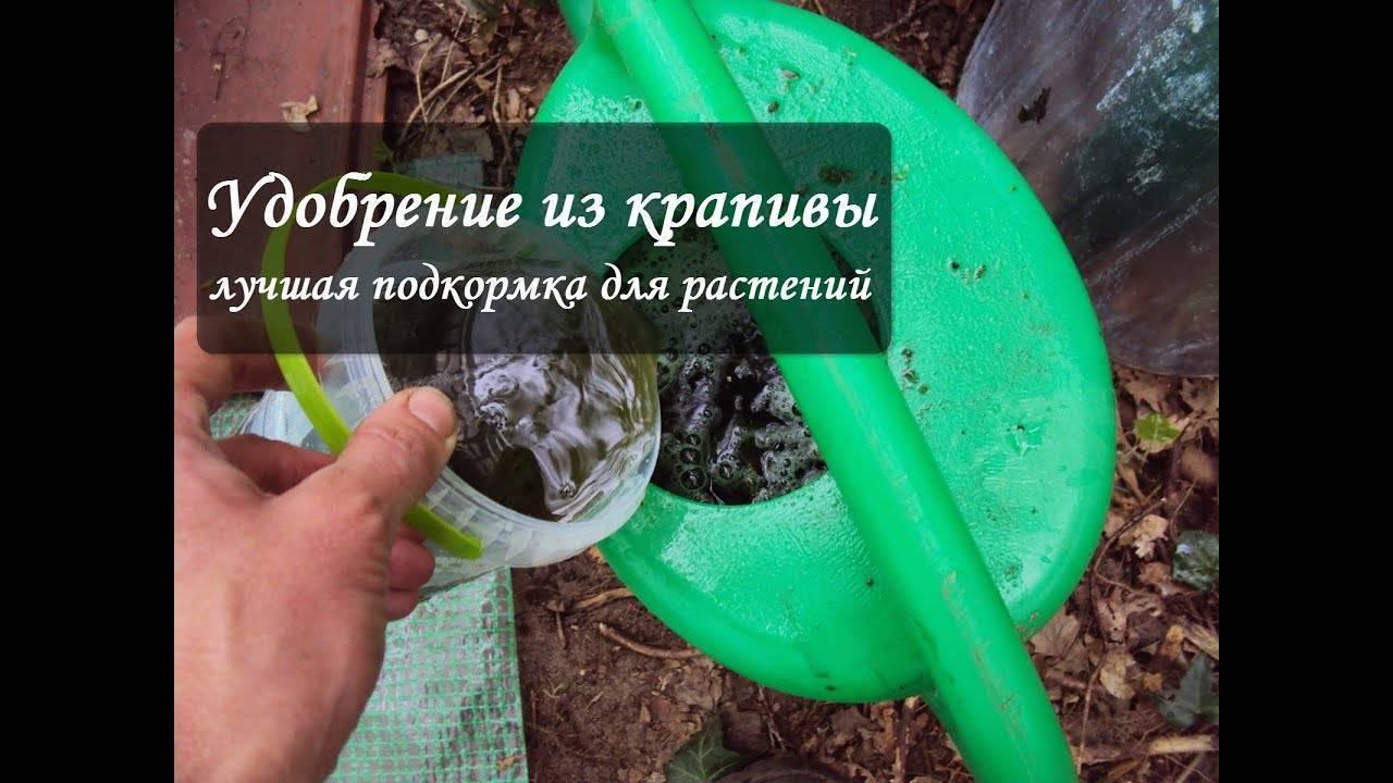 Как сделать удобрение из травы и сорняков: компостирование, настои, сбраживание: новости, удобрение, огород, советы, сад и огород