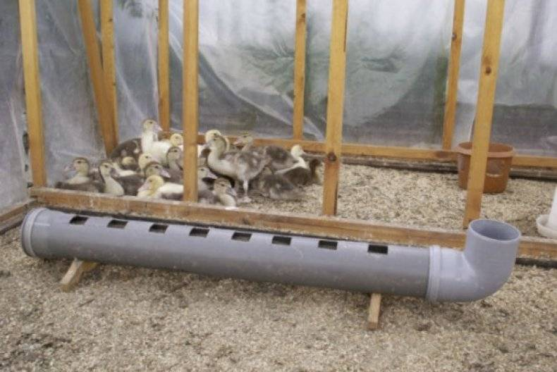 Кормушки для кур: 120 фото и видео самодельных и автоматических кормушек для птицы