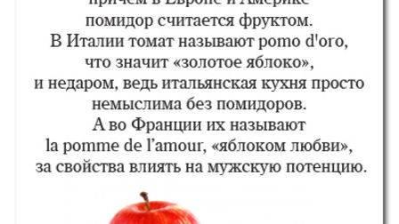 Томаты или помидоры, как правильно. какие же различия между терминами?   дачная жизнь