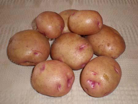 Сорт картофеля бела роса описание сорта фото