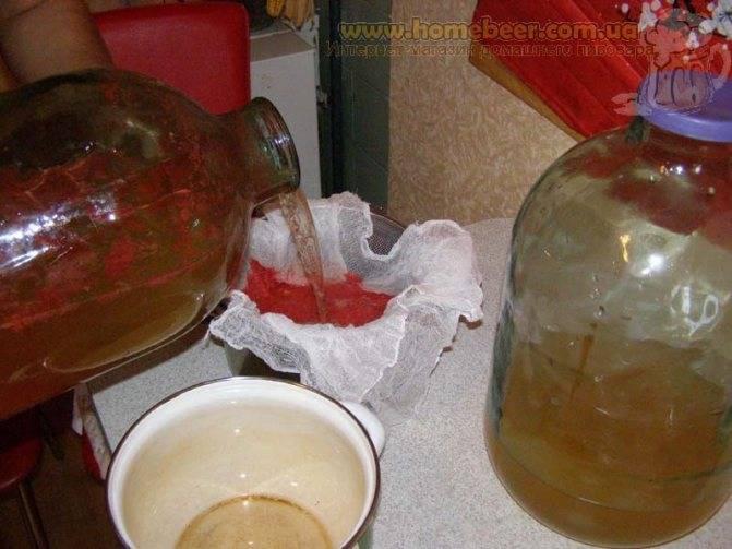 Кому можно, а кому нельзя пить чайный гриб