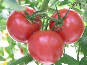 Томат груша красная: характеристика и урожайность сорта с фото