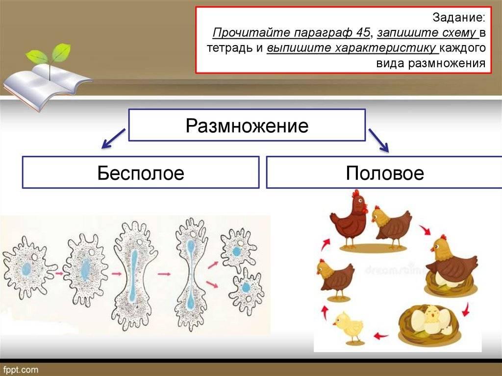 Характеристика способов бесполого размножения организмов