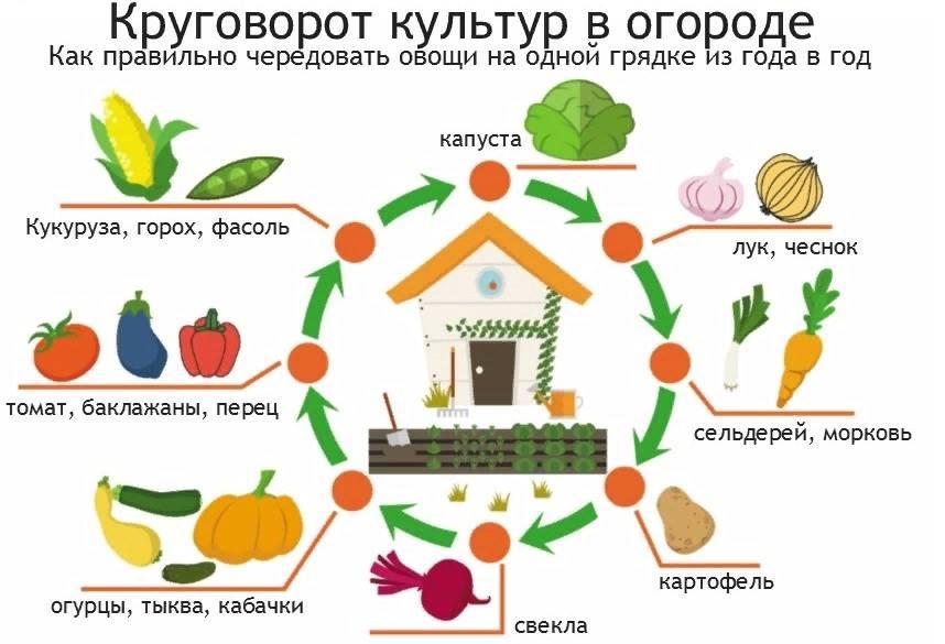 Таблица севооборота культур на огороде — что после чего сажать