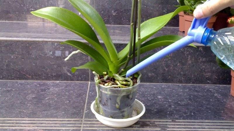 Особенности полива орхидей зимой
