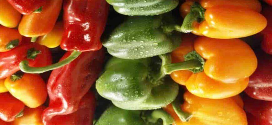 Виды сладкого перца selo.guru — интернет портал о сельском хозяйстве
