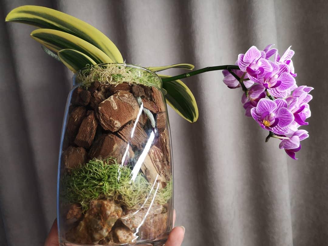Интересный вопрос: зачем нужен дренаж для орхидей?