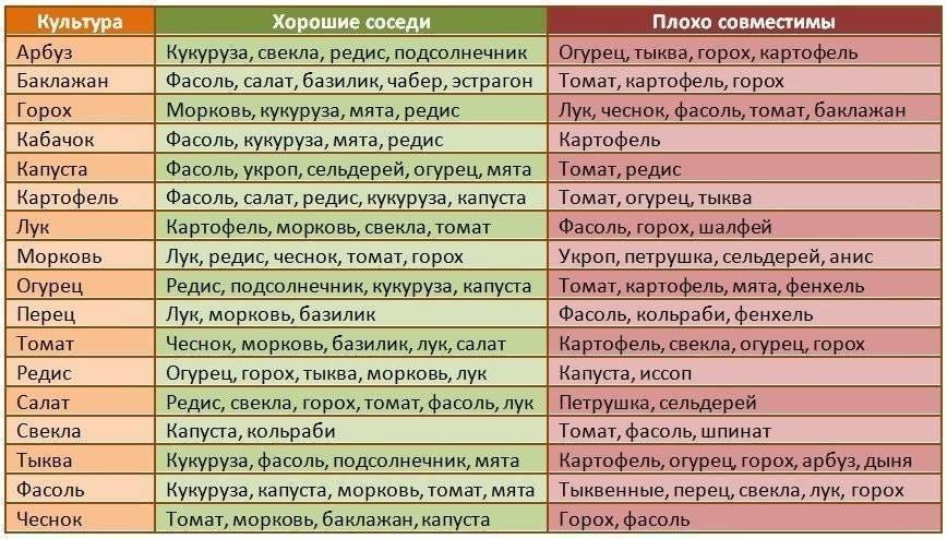 Что с чем сажать рядом: выгодное соседство овощей и растений - prosad.ru всё про сад и огород