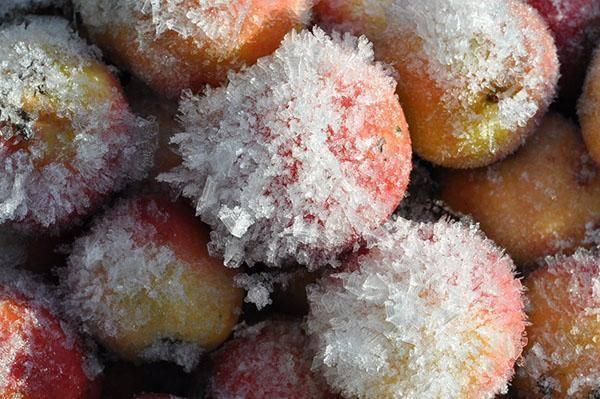 Можно ли замораживать яблоки на зиму для компота и шарлотки