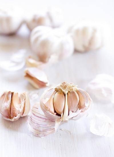 Подготовка чеснока к посадке весной, и выращивание чесночного урожая
