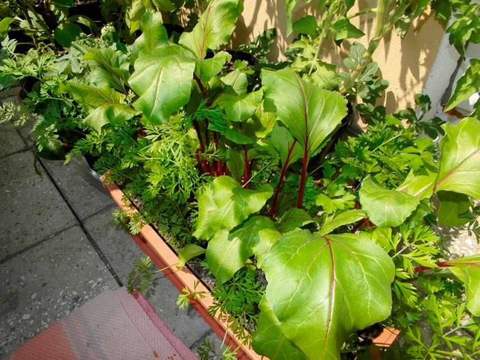 Совместимость растений в саду и огороде: таблица правильных посадок овощей и других культур