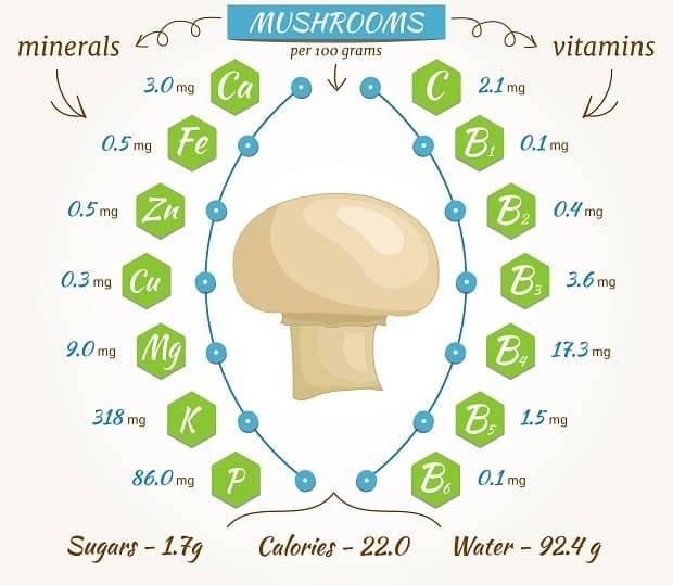 Белый гриб - полезные и опасные свойства белого гриба